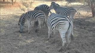 バンディア自然保護区(Reserve de Bandia)で見た動物 その1.