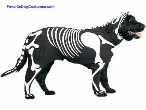favorite large dog halloween costumes