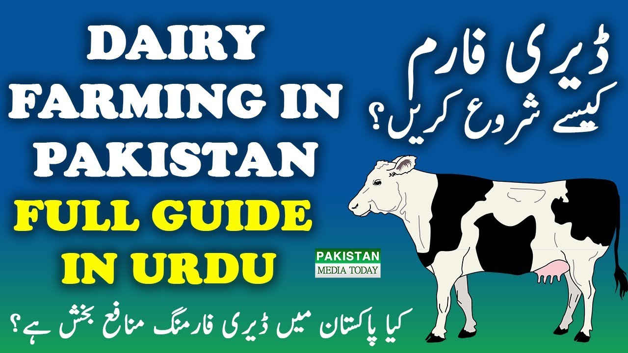 Dairy farming in pakistan momekh & co.