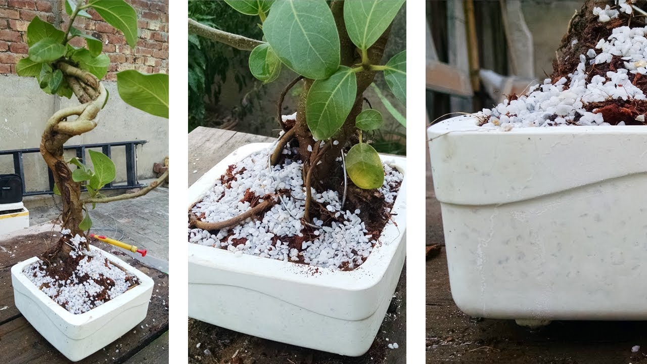 How To Make A Bonsai Pot Beautiful White Shiny