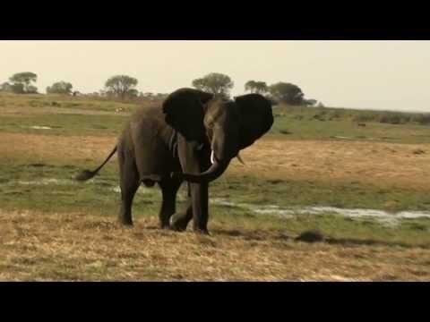 Kafue National Park / Busanga Plains - Zambia