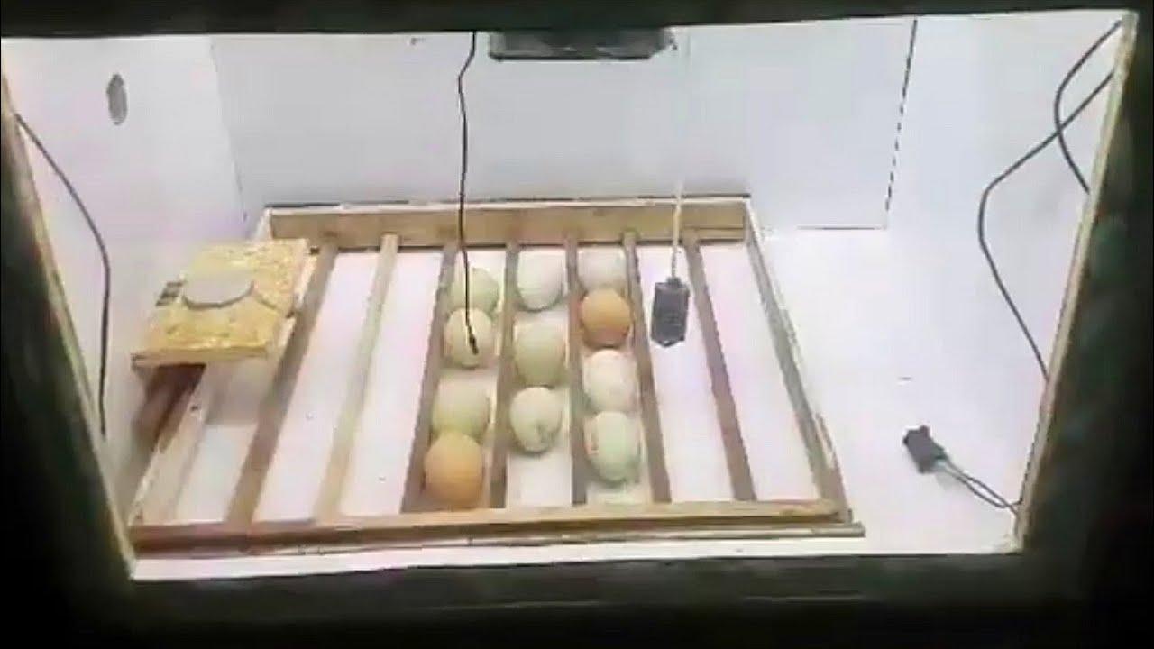Nuestras incubadoras caseras funcionan y te decimos cómo se hacen