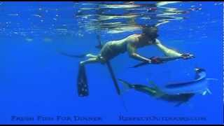 spearfishing! Hand feeding dorado, spear a giant