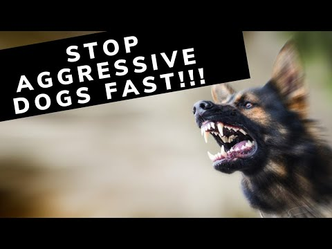 How to stop an Aggressive Dog with Butch Cappel