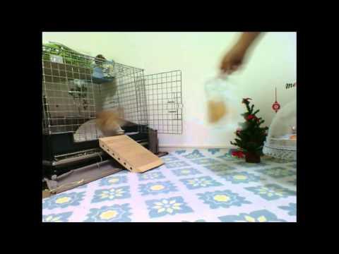 モキュ様クリスマスパーティー - YouTube