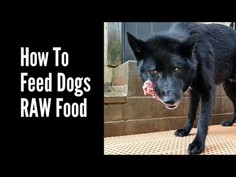 How To Feed Dogs Raw Food