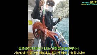 강민호 문어조황 5월10일 원도권출조 킬로급오버 꾸준~