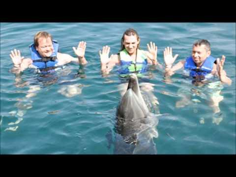 Дискотека Авария - Дельфины