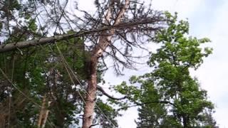 Таджикские лесорубы :) 1  Жесть.Tajiks Arborist in Russia LOL