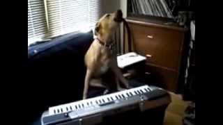 Собака играет и поет