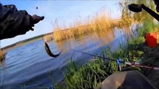 """Рибалка в селі Боголюби """"у Світлани"""" на карася та щуку"""