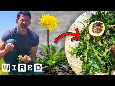 How to Forage and Cook Wild Plants | Basic Instincts | WIRED