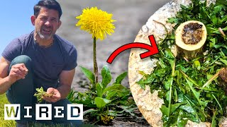 How To Turn Garden Weeds Into Delicious Meals   Basic Instincts   WIRED