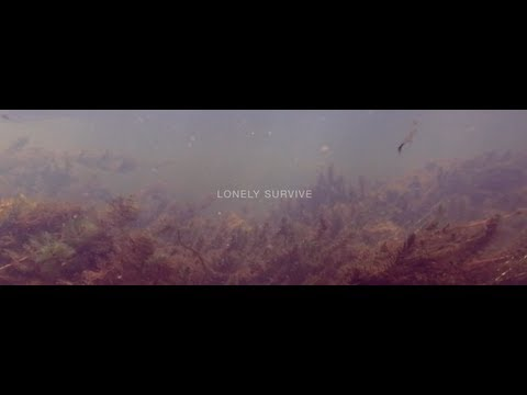 """""""Lonely Survive"""" by Verlaine"""