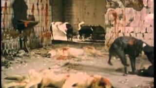 Другое кино СССР 'Псы'