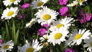 Цветущие поля
