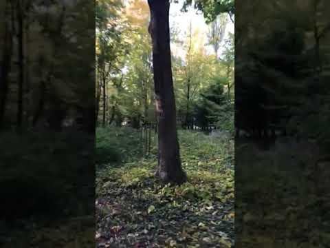Jesienny Wierszyk Po Rosyjsku