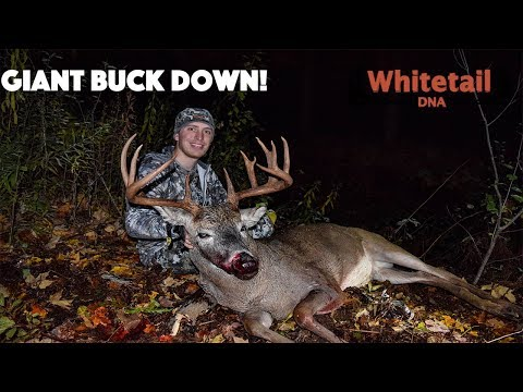 GIANT BUCK DOWN! - Minnesota Bowhunting - 2018 Vlog #29