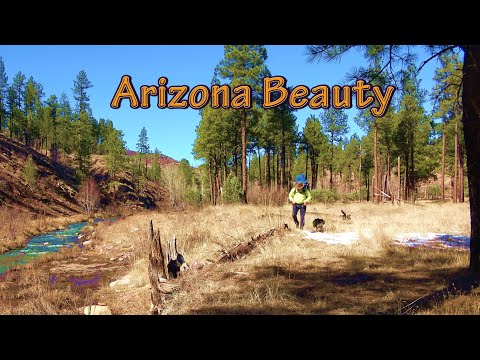 Brown Trout Arizona Fishing Spots Hike And Camp Along Canyon Creek With My Backcountry Dog 4K Video