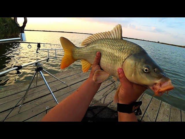 Рыбалка!Столько ПАРОВОЗОВ я ещё не видел.Рыбалка с НОЧЁВКОЙ.Ловля КАРПА