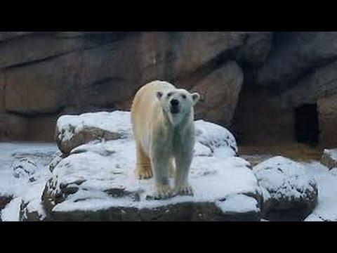 NC Zoo guide