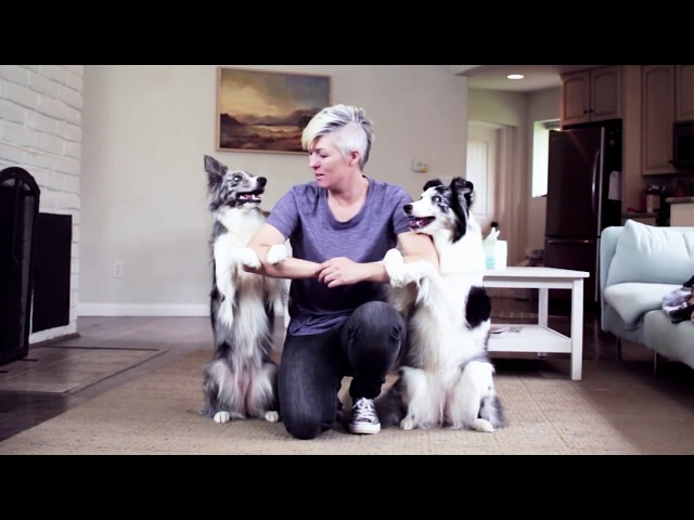 Dogs Hug :)  - Cute dog trick