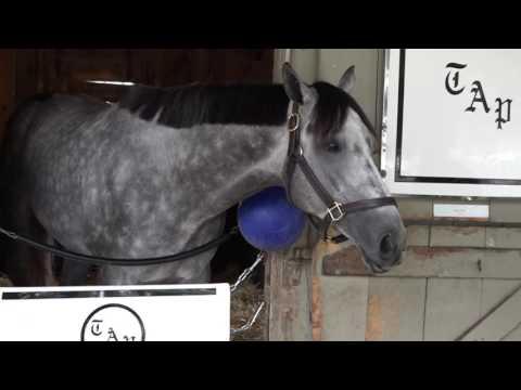 Destin at Saratoga Race Course
