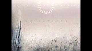 Animals as Leaders - David