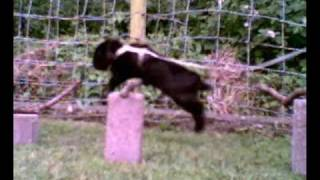 Sooty, Rabbit Jumping ! R.I.P Sooty =[