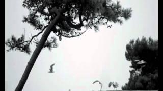 09. Modravé Probuzení - klip: Verona - Ztracená bloudím