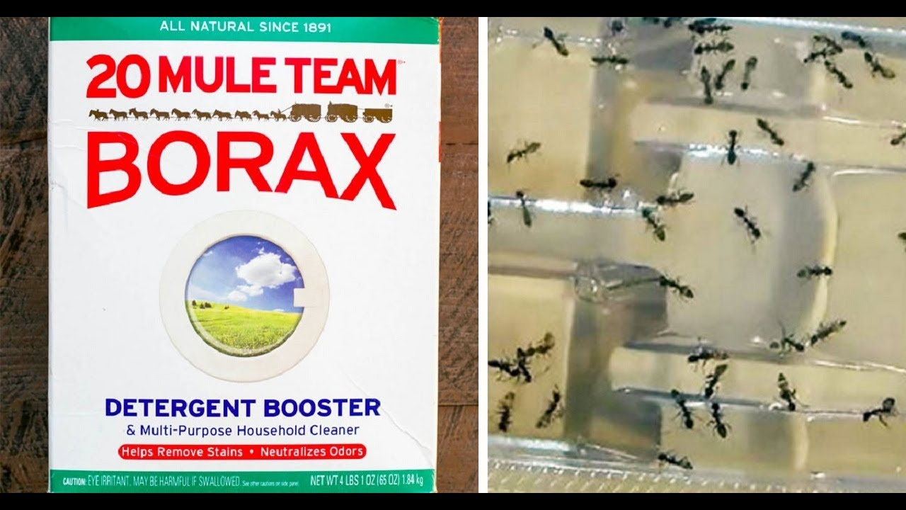 Borax Carpet Cleaner Fleas Carpet Vidalondon