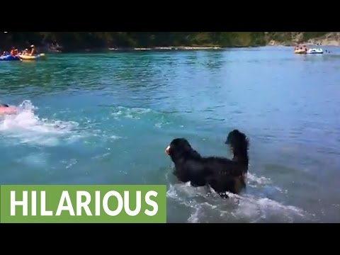 Dog demonstrates hilariously unique method of swimming