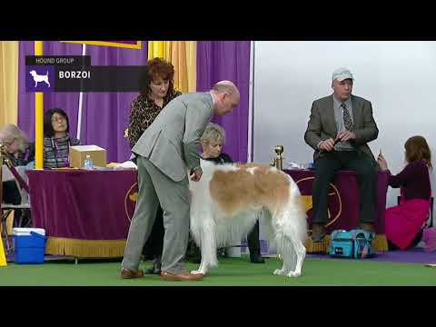 Borzois | Breed Judging 2019