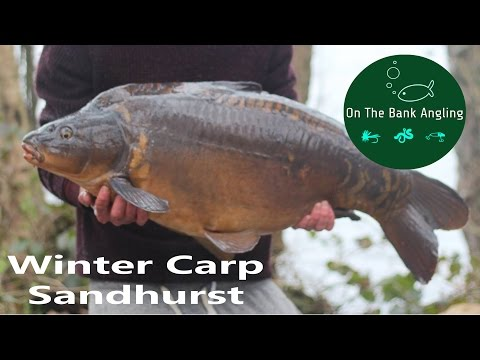 Winter Carp Fishing - A Sandhurst Special!