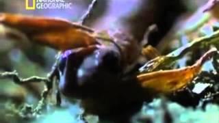 LOS ANIMALES MAS PELIGROSOS DEL MUNDO - 4 - LA INDIA