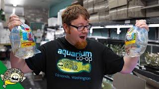 aquarium-co-op-fish-unboxing-meet-robert