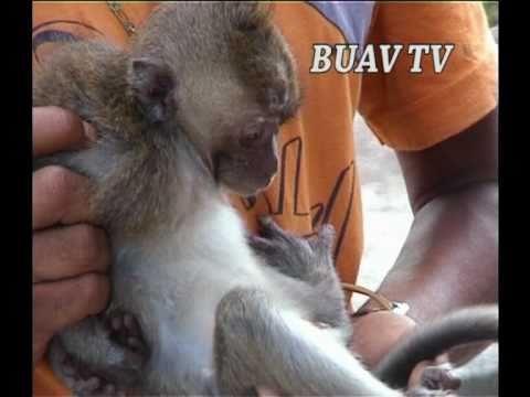 Das Grausame Geschäft Mit Affen Youtube