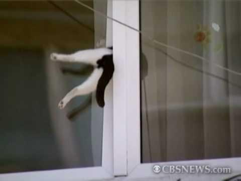 Cat Gets Stuck in Window