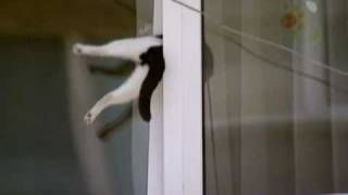 Cat Gets Stuck in Window