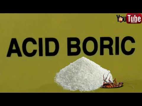Boric Acid The Best Natural Cockroach Killer (2017)