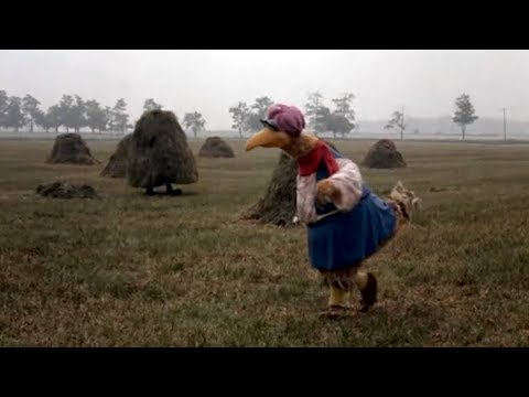 Follow That Bird: Hay Stacks