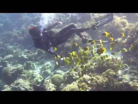 Exploring the underwater of Zanzibar