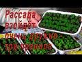 Перед посевом семян посмотрите это видео или как получить дружные всходы! видео