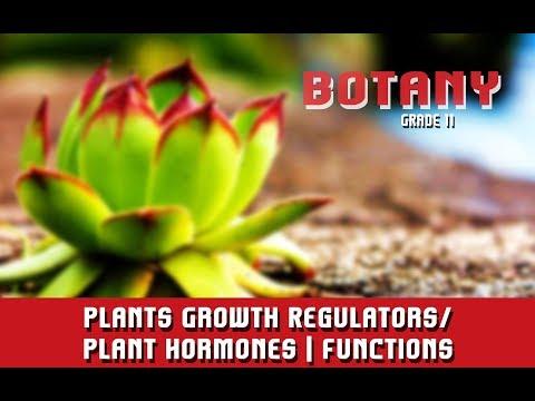Plants Growth Regulators/Plant Hormones | Functions | Section 6