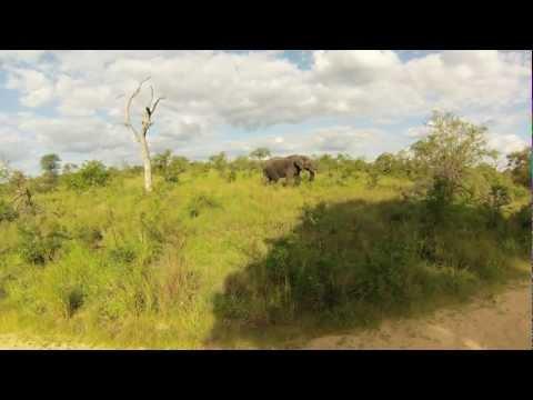 Gopro Hero 3 - Safari, South Africa
