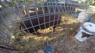 Oscar Farm visit Go Pro