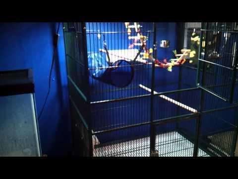 New Sugar Glider Cage!