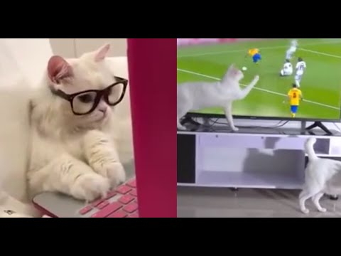 Funniest Animals 🤣 – Best Of The 2020 Funny Animal Videos Compilation 😁 – Cutest Animals Ever #20