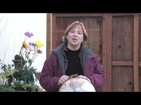 Gardening Tips & Flowers : How to Grow Blanket Flower (Gaillardia Grandiflora)