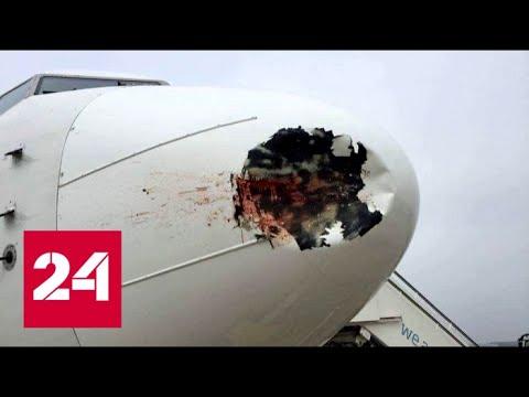 Чайки и самолеты: чем птицы угрожают лайнеру - Россия 24